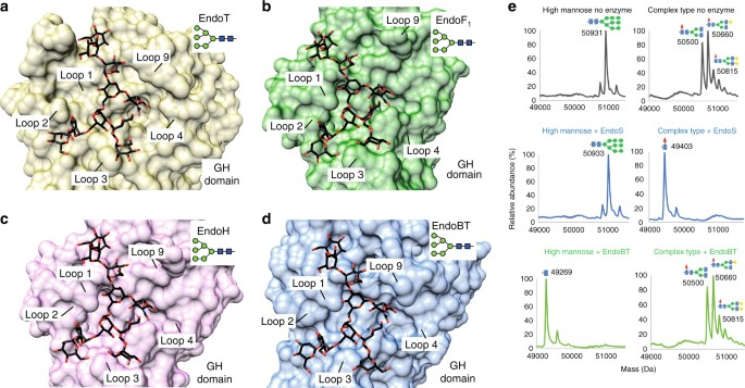 Structural basis for the recognition of complex-type N-glycans by