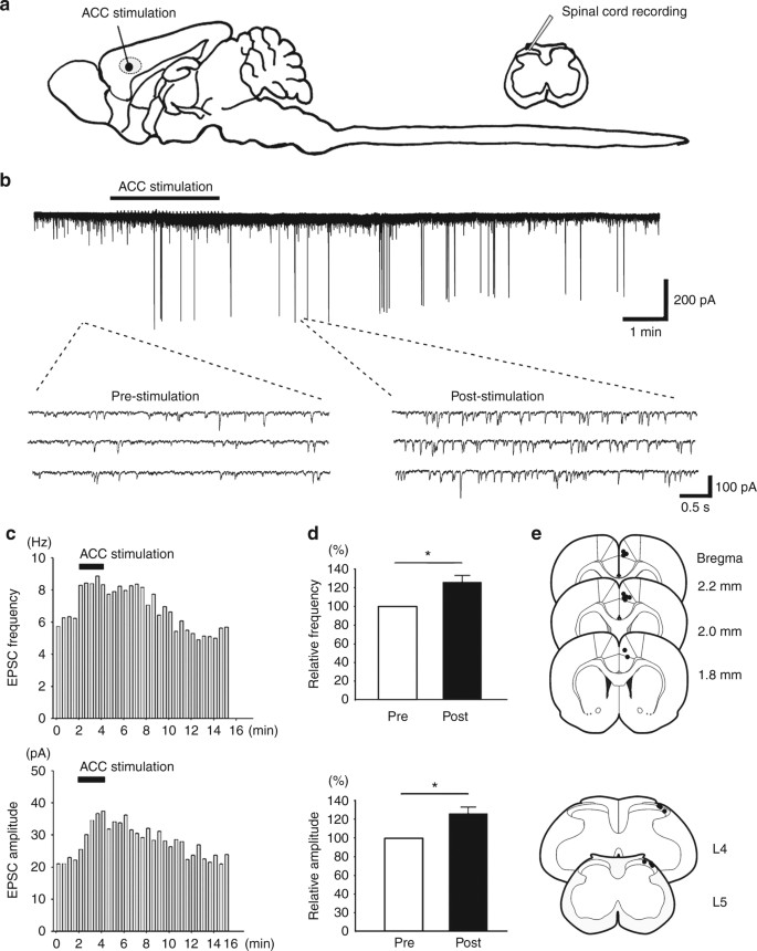Top-down descending facilitation of spinal sensory