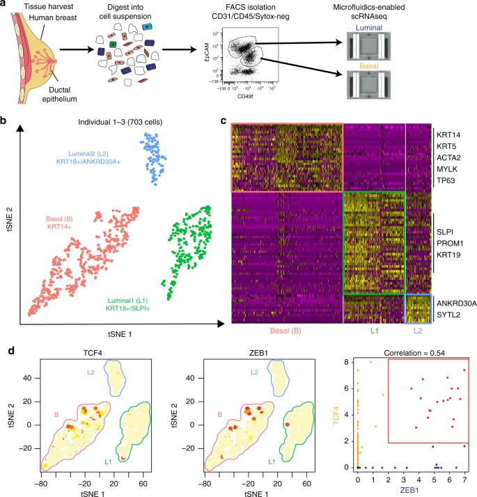 Profiling human breast epithelial cells using single cell