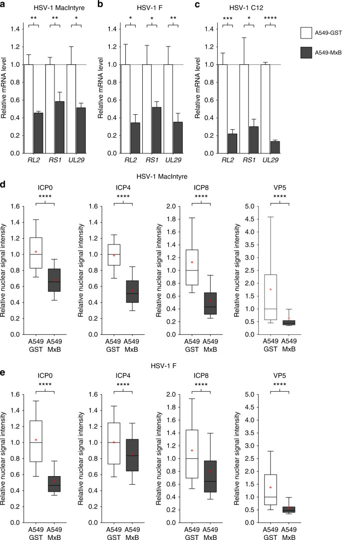 MxB is an interferon-induced restriction factor of human