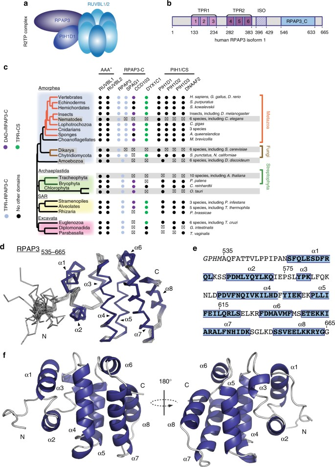 The RPAP3-Cterminal domain identifies R2TP-like quaternary