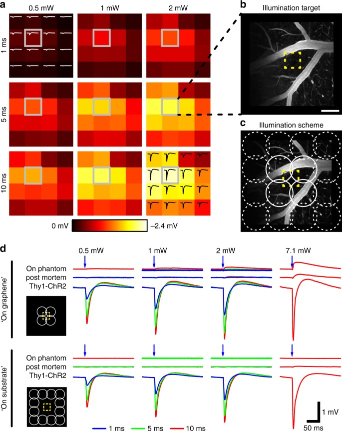 Deep 2-photon imaging and artifact-free optogenetics through