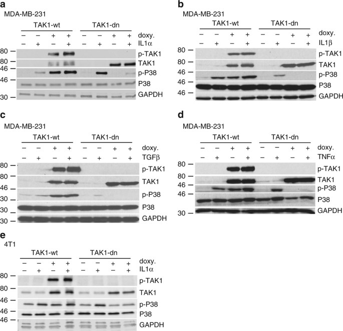 TAK1 mediates microenvironment-triggered autocrine signals and