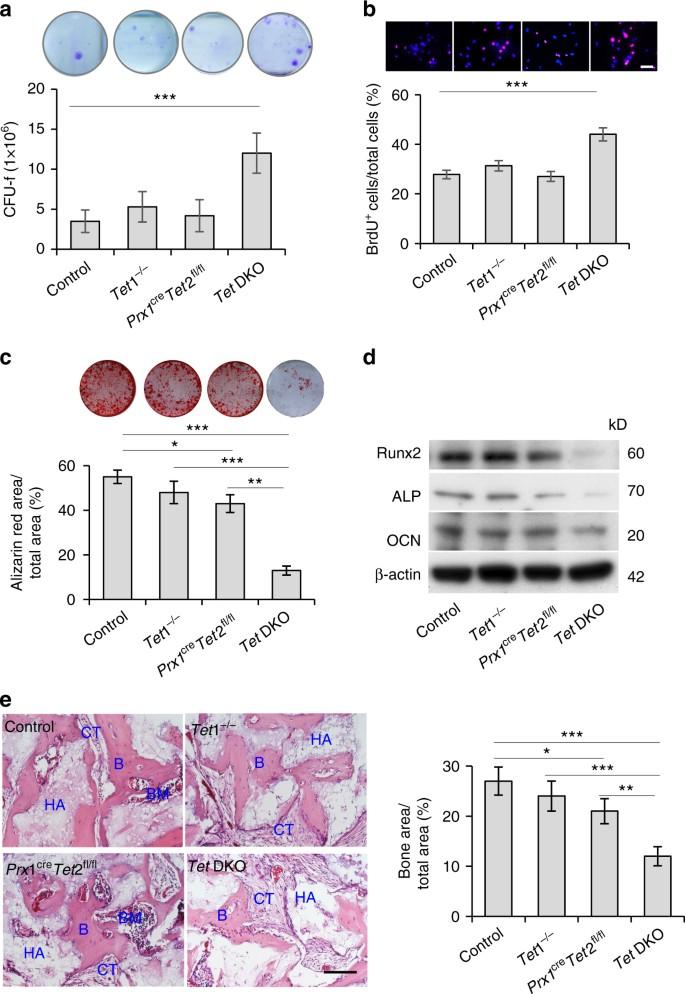 Tet1 and Tet2 maintain mesenchymal stem cell homeostasis via