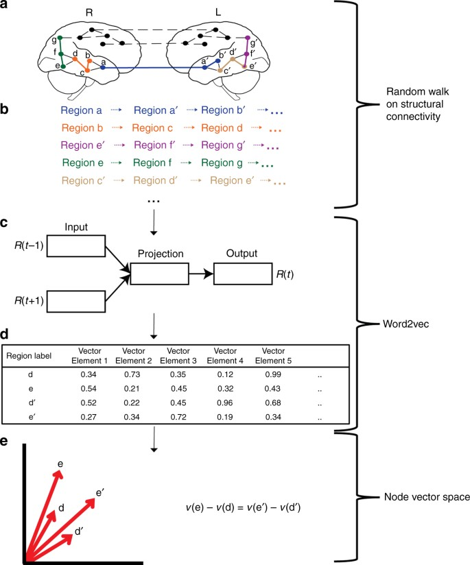 Mapping higher-order relations between brain structure and