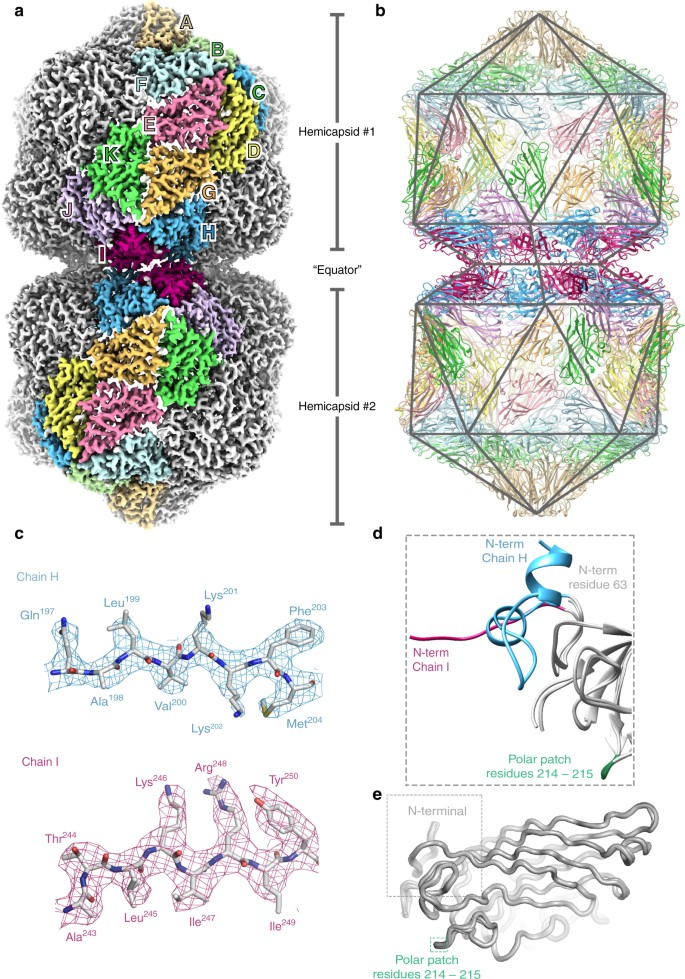 The 3 3 Structure Of A Plant Geminivirus Using Cryo EM