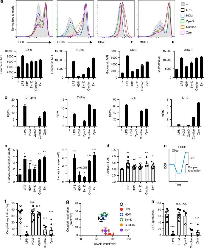 Glycolytic metabolism is essential for CCR7 oligomerization
