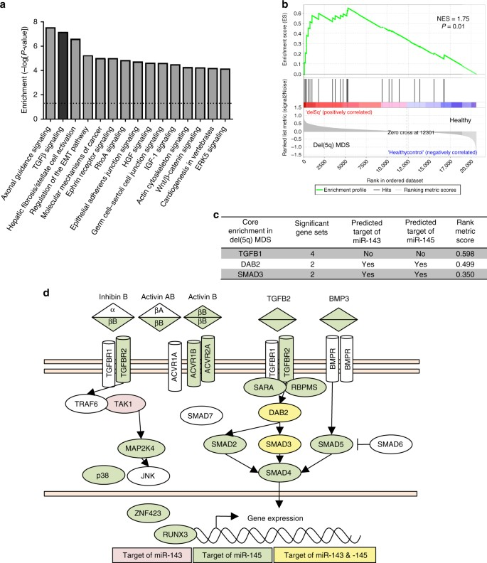 miR-143/145 differentially regulate hematopoietic stem and