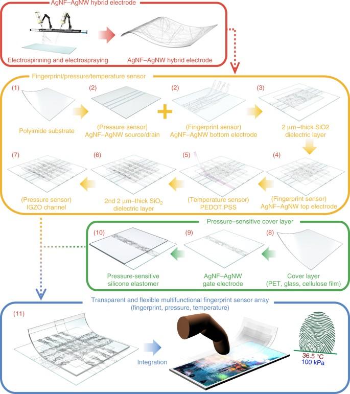 Transparent and flexible fingerprint sensor array with multiplexed