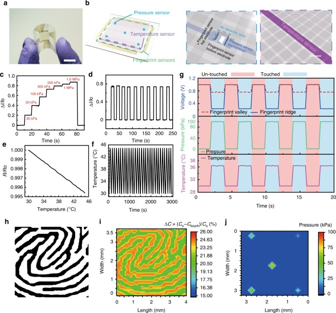 Transparent and flexible fingerprint sensor array with