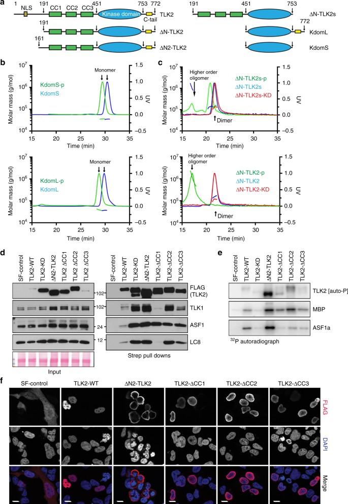 Molecular basis of Tousled-Like Kinase 2 activation   Nature
