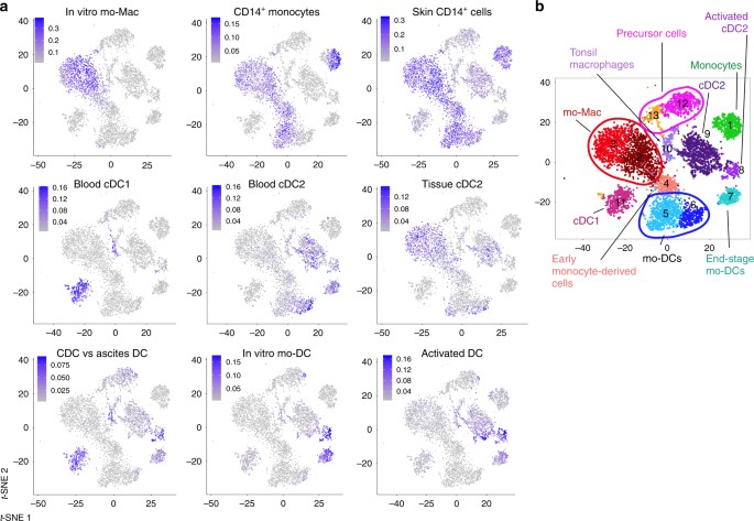 Human in vivo-generated monocyte-derived dendritic cells and