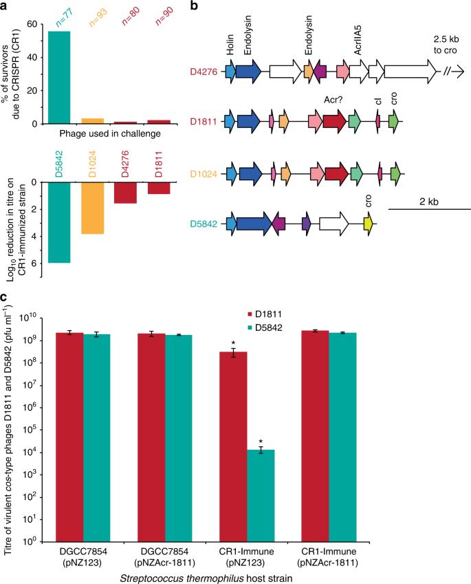 Widespread anti-CRISPR proteins in virulent bacteriophages