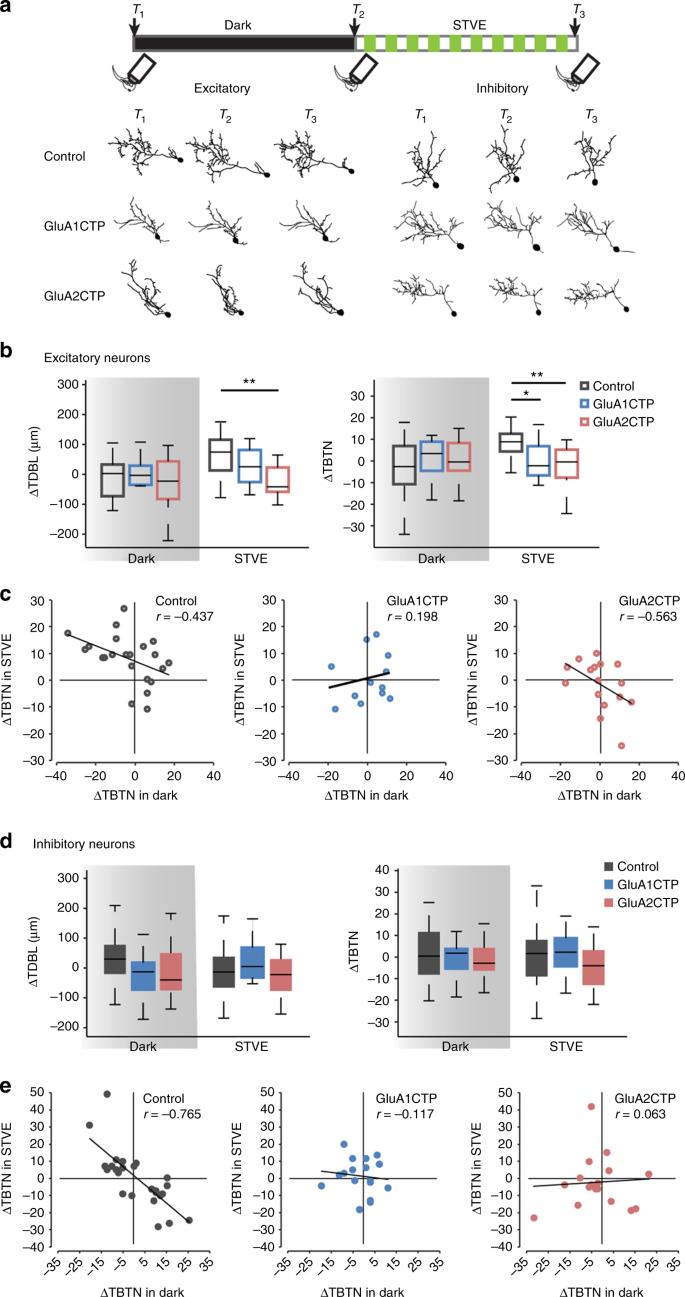 Excitatory synaptic dysfunction cell-autonomously decreases