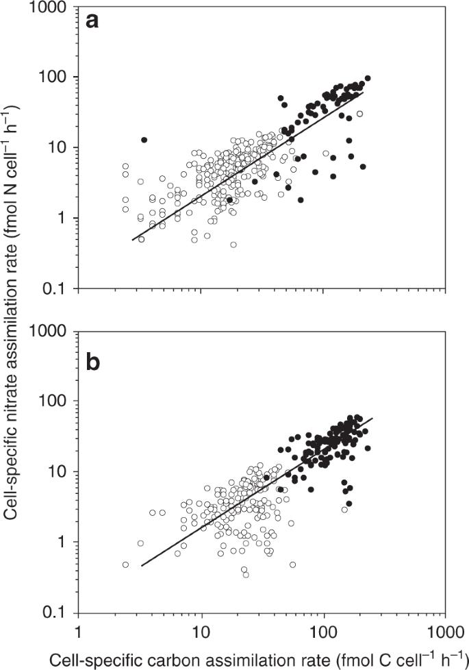 Turbulence simultaneously stimulates small- and large-scale CO 2