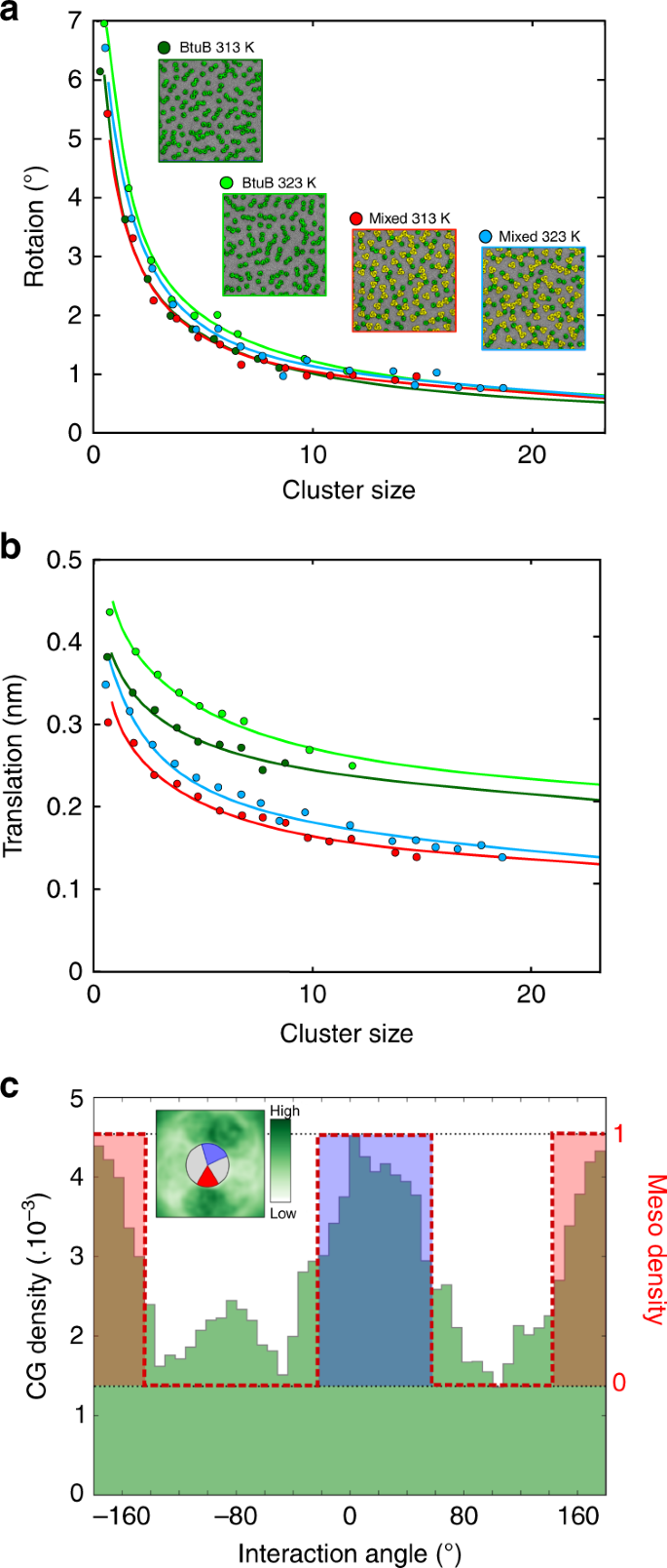 How nanoscale protein interactions determine the mesoscale dynamic
