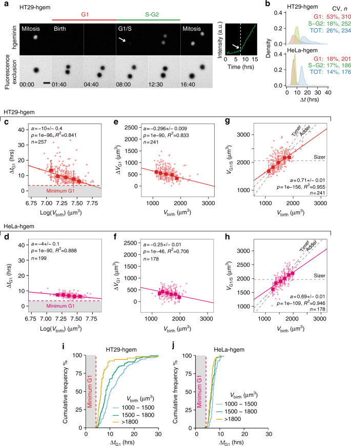 Size control in mammalian cells involves modulation of both