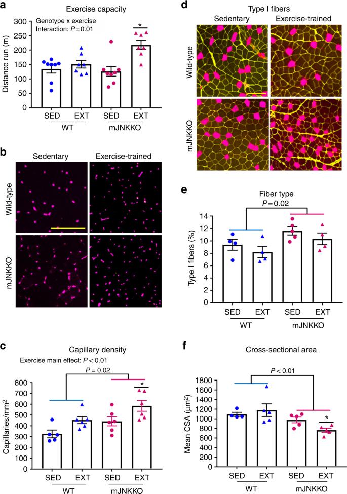 JNK regulates muscle remodeling via myostatin/SMAD