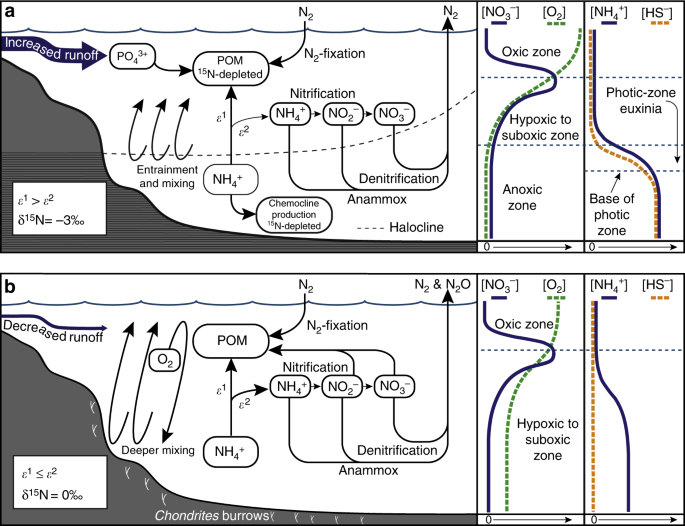 schematic diagram of the nitrogen cycle during the petm at kheu river  a  the nitrogen cycle during the initial and late stages of the petm when the  water