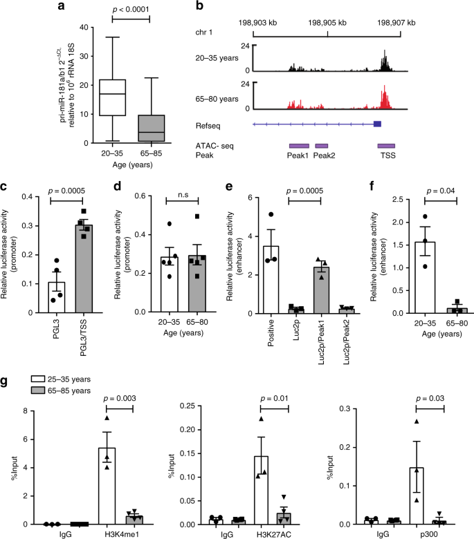Regulation of miR-181a expression in T cell aging | Nature