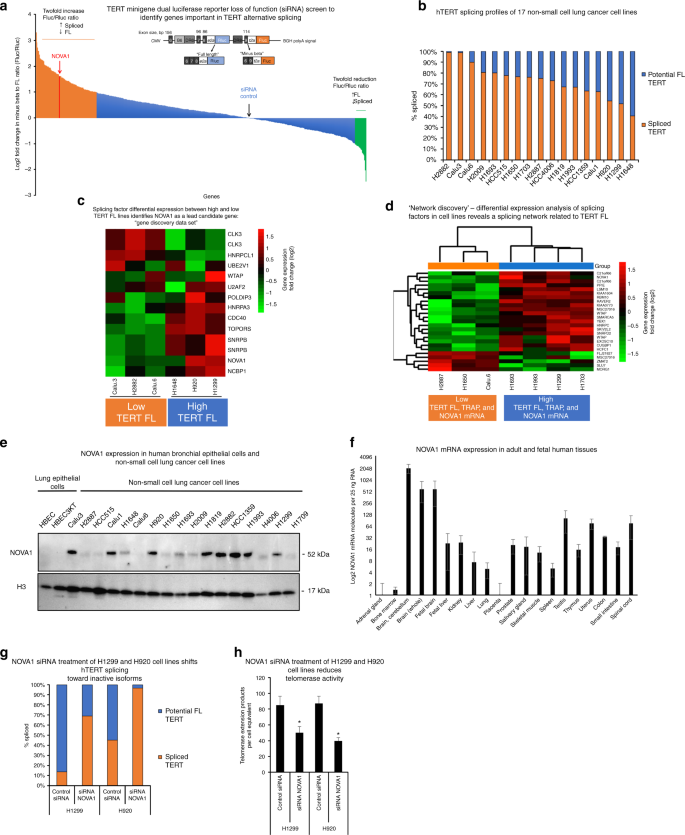 NOVA1 regulates hTERT splicing and cell growth in non-small