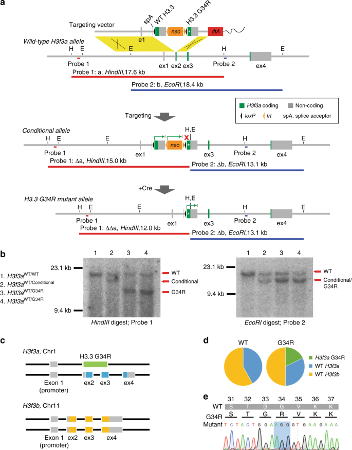 Inhibition of a K9/K36 demethylase by an H3 3 point mutation