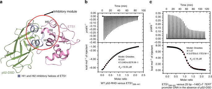 Structural basis for reactivating the mutant TERT promoter