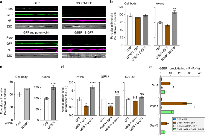 Axonal G3BP1 stress granule protein limits axonal mRNA translation