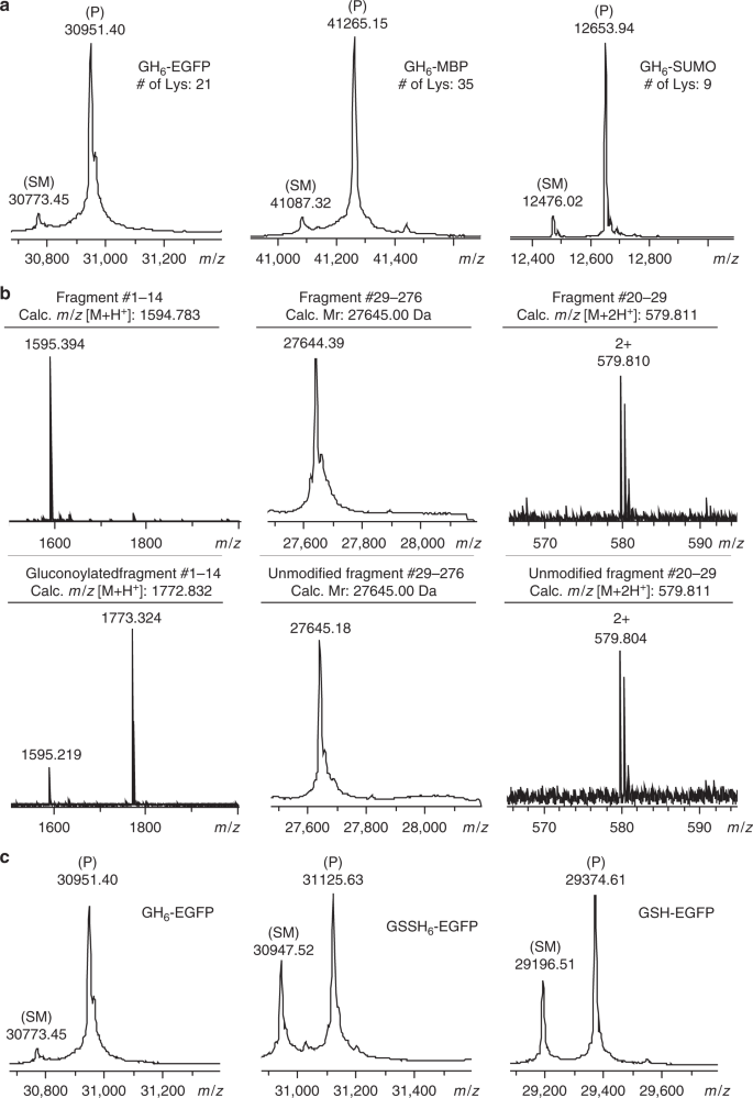 Selective N-terminal acylation of peptides and proteins with a Gly