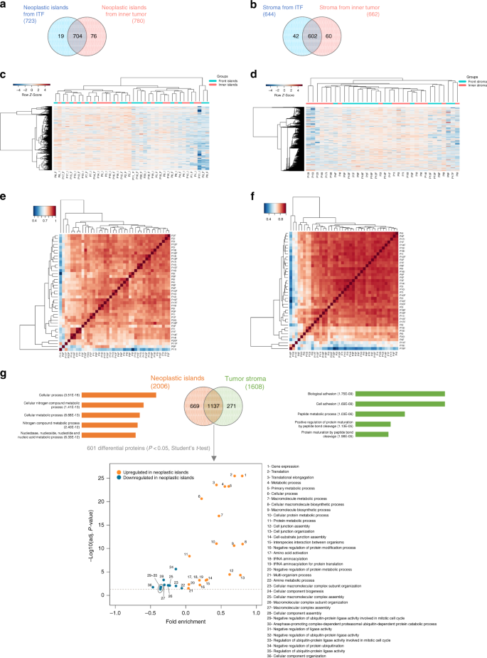 Combining Discovery And Targeted Proteomics Reveals A Prognostic Signature  In Oral Cancer   Nature Communications