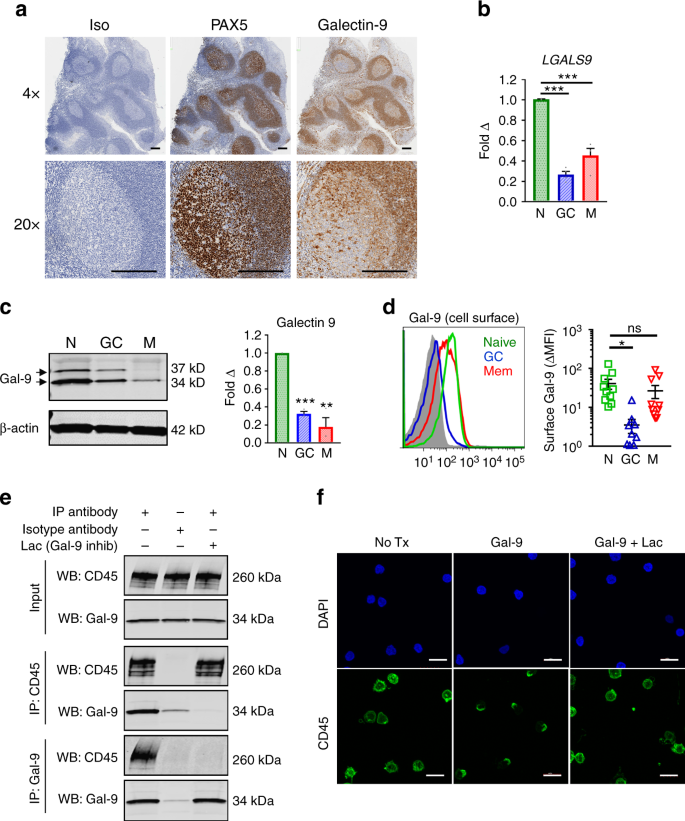 Galectin-9 suppresses B cell receptor signaling and is regulated by