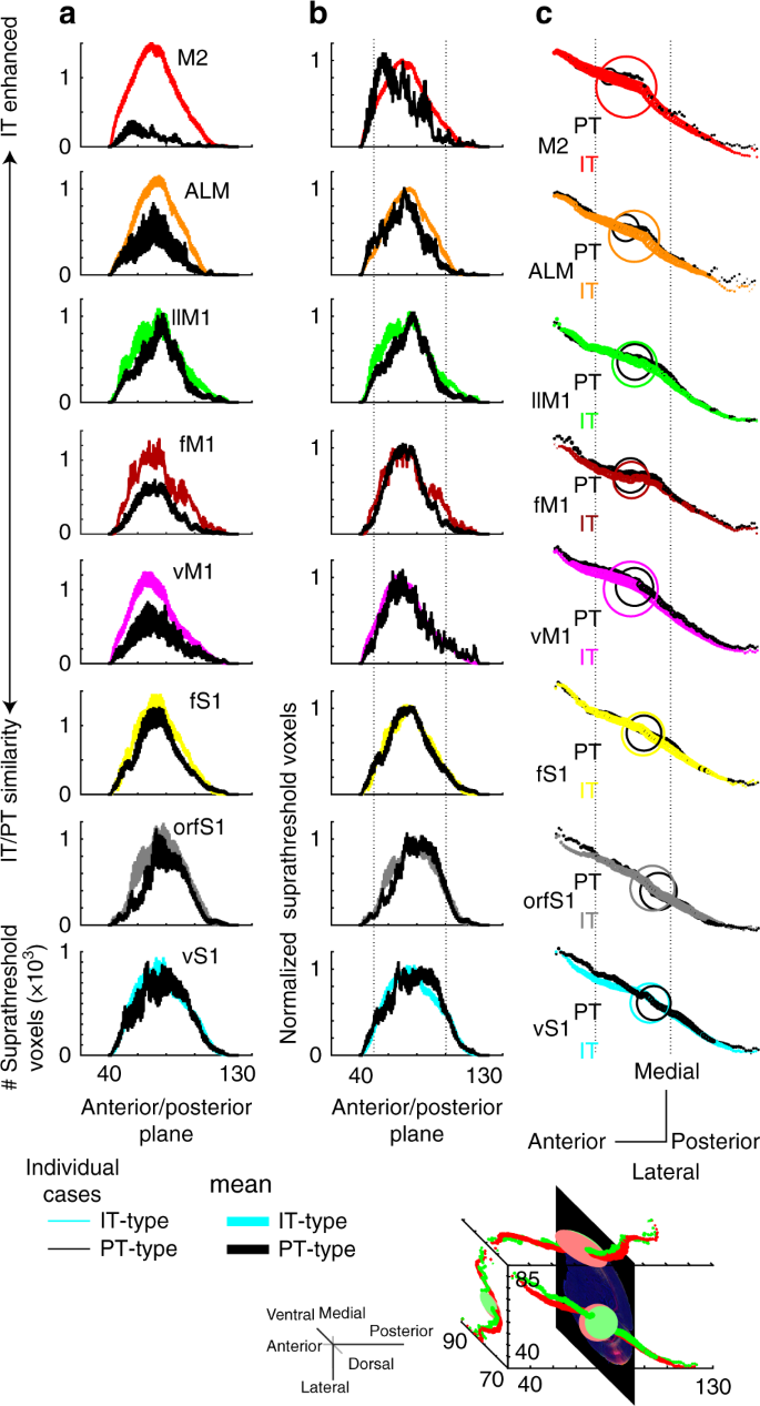 Topographic precision in sensory and motor corticostriatal