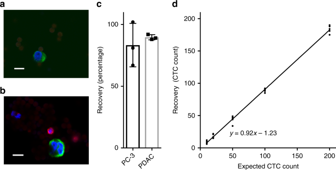 The VAR2CSA malaria protein efficiently retrieves circulating tumor