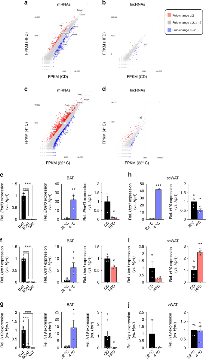LincRNA H19 protects from dietary obesity by constraining expression