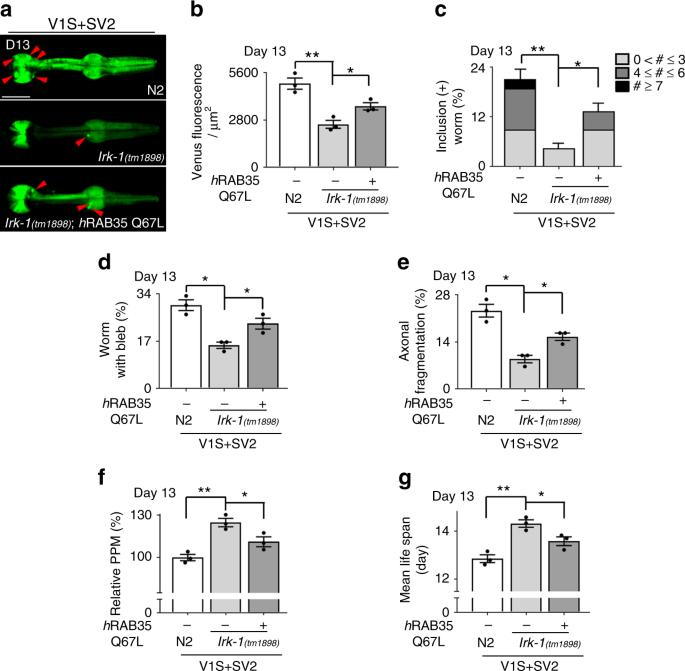 LRRK2 kinase regulates α-synuclein propagation via RAB35