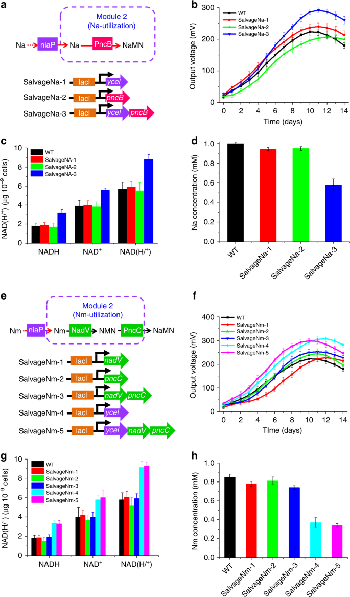 Modular engineering to increase intracellular NAD(H/ + ) promotes