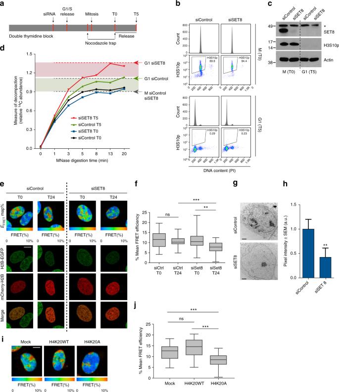 Histone H4K20 methylation mediated chromatin compaction