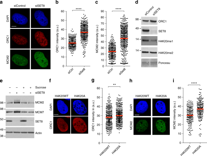 Histone H4K20 methylation mediated chromatin compaction