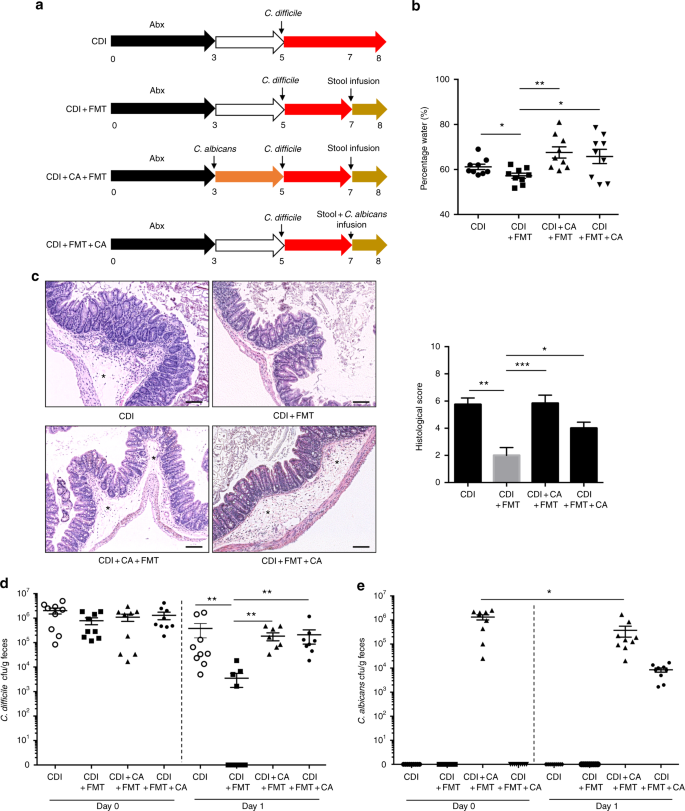 Gut fungal dysbiosis correlates with reduced efficacy of
