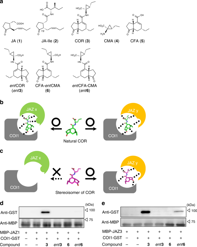 Enigmatic Chemical Tag Is Altered In >> A Rationally Designed Jaz Subtype Selective Agonist Of