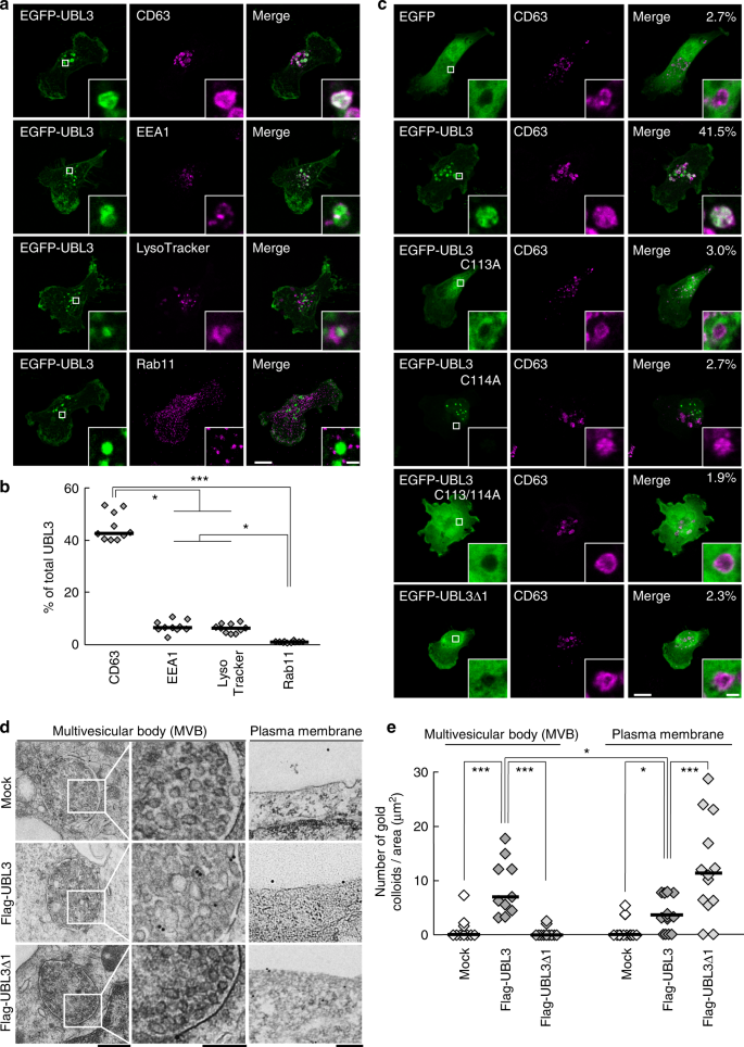 UBL3 modification influences protein sorting to small extracellular