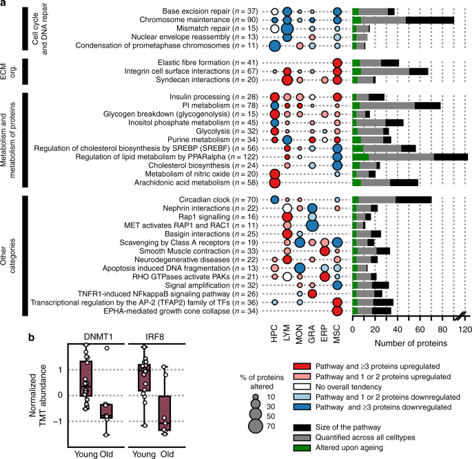 Cell-specific proteome analyses of human bone marrow reveal