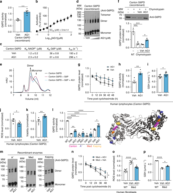 Correcting glucose-6-phosphate dehydrogenase deficiency with