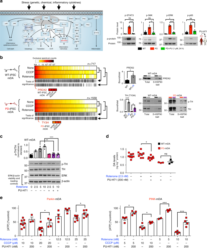 HSP90-incorporating chaperome networks as biosensor for