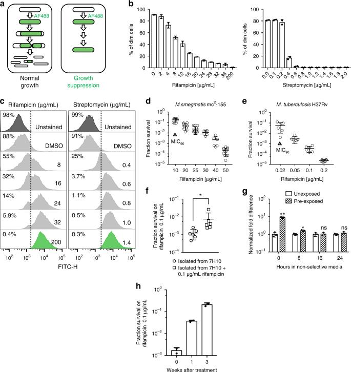 Rifampicin can induce antibiotic tolerance in mycobacteria