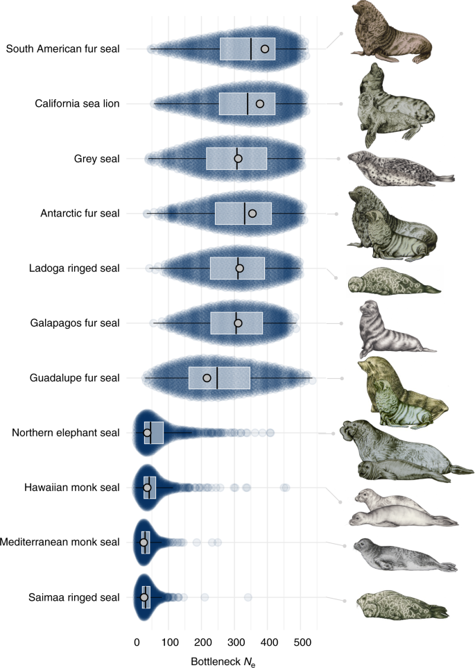 Demographic histories and genetic diversity across pinnipeds