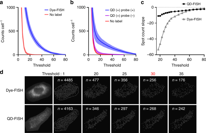 Enhanced mRNA FISH with compact quantum dots | Nature