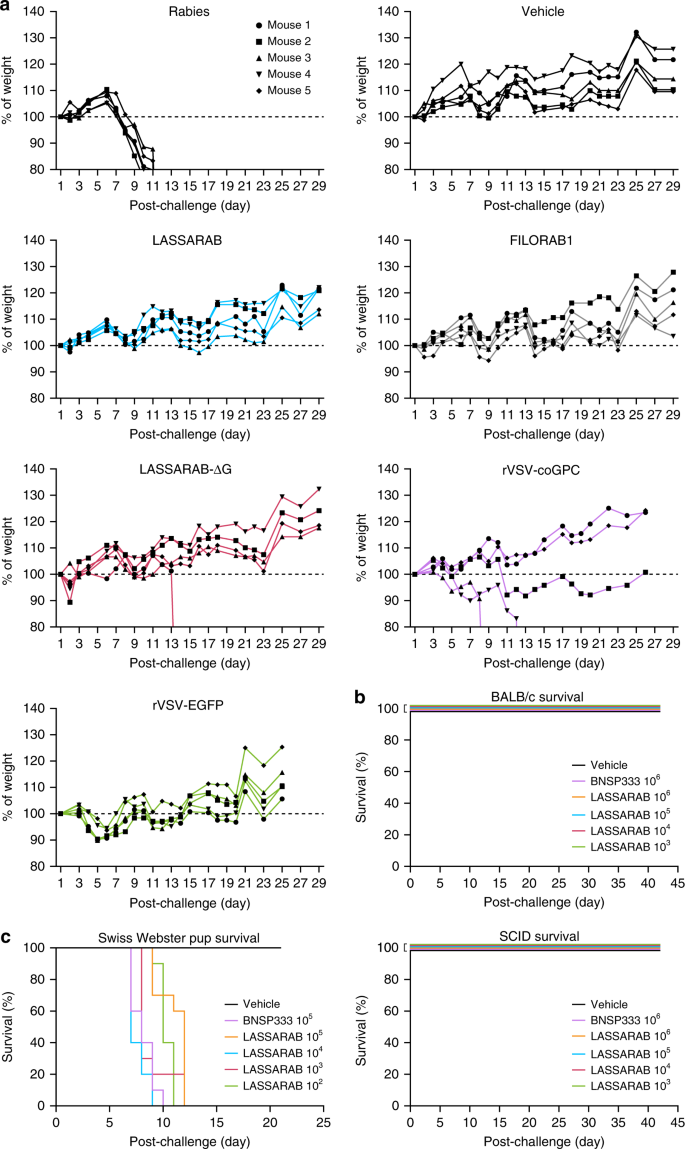Non-neutralizing antibodies elicited by recombinant Lassa
