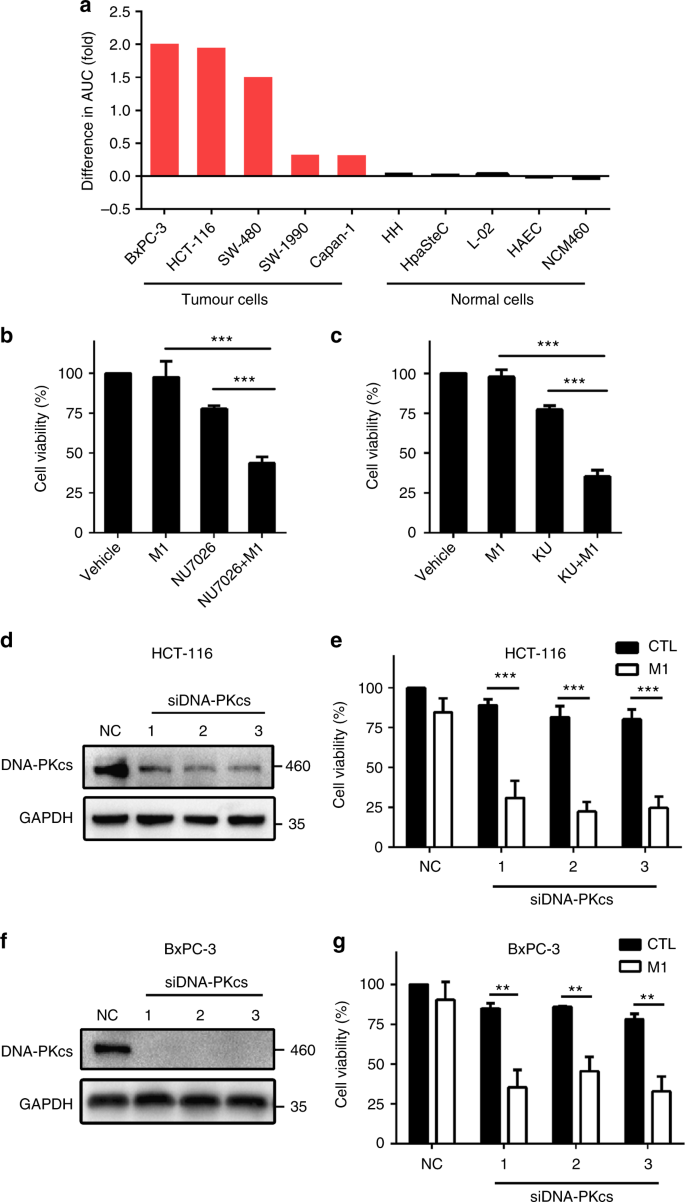 DNA-PK inhibition synergizes with oncolytic virus M1 by inhibiting