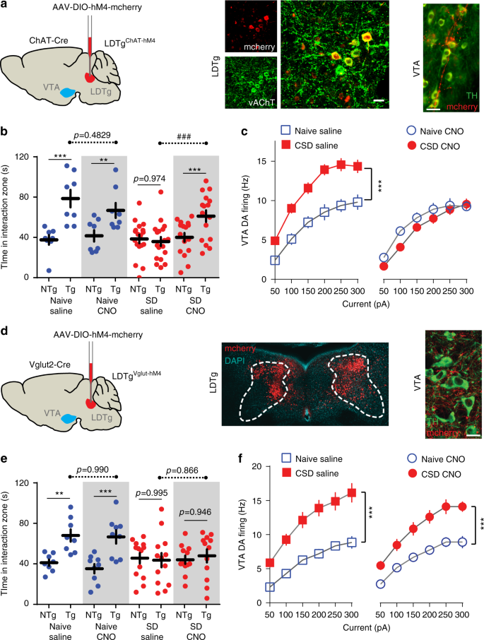 Mesopontine cholinergic inputs to midbrain dopamine neurons drive